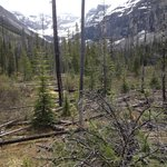 stanley glacier valley:  regrowth after fire