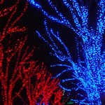 During the Zoo Lights in December
