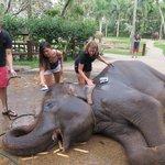 Washing these wonderful creatures