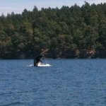 Another one from the whale watching tour recommended by the owners. Amazing!