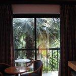 Вид из окна. Пальма