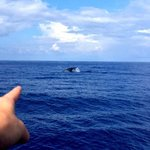 Whale watching, organised by the staff