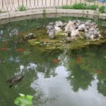 The pond had many turtles lazing in the sun!