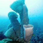SPonge coral beauty of Gorantalo