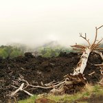 skeleton trees left behind from the lava flow