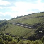 Vineyards in St. Goar