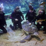 Sea Biscuit the Green Sea Turtle