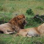 Lion pair on the Serengeti