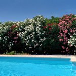 Au bord de la piscine cernée de fleurs...