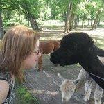 alpacas and me