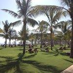 Massive lawns