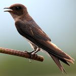 Sierpes River birdlife