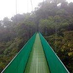 hanging bridges in the cloudforest