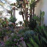 un piccolo esempio delle piante grasse sui viali dell'hotel