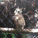 An owl (lechuza)