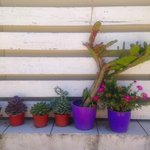 beautiful plants and cacti