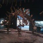 Dino Room 1