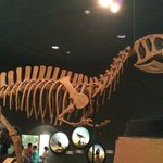 Dino Room 2