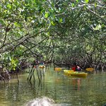 Low ceiling in the mangroves.
