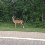 The deer tend to hang out by the park roads early in AM