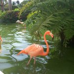 Flamingos in the grounds