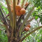 Чудесные райские фрукты