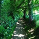 The Walking Path to Lulworth Cover