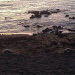 2 turtles sleeping at the beach