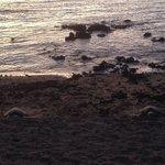 2 turtles sleeping at the beach