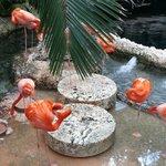 Pink flamingo exhibit