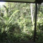 Rainforest at Rimba Ecolodge