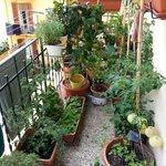 herbs on Manuela's balcony