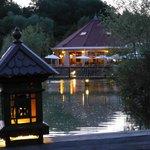nuit d'été aux jardins de Beauval