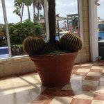 des cactus... particuliers à la reception ^_^