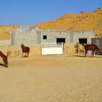 Patricia's horses