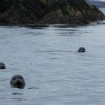 seals during our Kayak experience