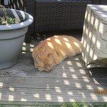 Pumpkin enjoying sunshine..