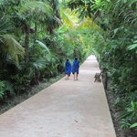 the walkway to the lobby & might see a coati walking around