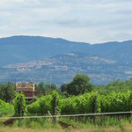 Leuta vineyard tour - Cortona in the background