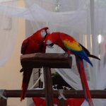 One of the pairs of birds in the hotel
