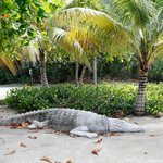 17 Feet of Concrete Crocodile