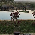 Drink at the pool bar looking at elephants at the watering hole.