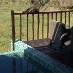 Baboon on our veranda!