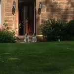 the B&B 2 jack russels