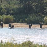 Elephant in Sabie River