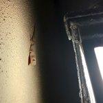 Милые геккончики по вечерам, по стенам номера