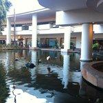 пруд отеля