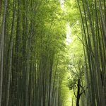 Take a deep breath in the Bamboo Forest....Ahhhhh