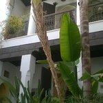 L'ombre des bananiers