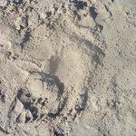Sabbia così bianca e sottile da sembrare farina